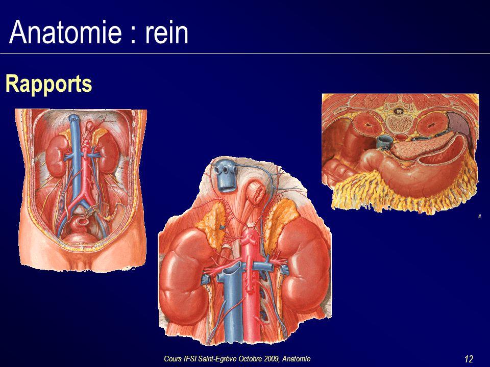 Cours IFSI Saint-Egrève Octobre 2009, Anatomie 12 Anatomie : rein Rapports