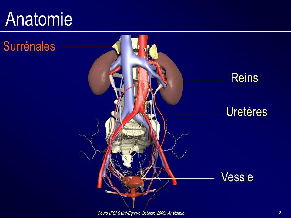 Cours IFSI Saint-Egrève Octobre 2009, Anatomie 23 Anatomie : bas appareil Verge –Urètre pénien et corps spongieux –Corps érectiles: 2 corps caverneux
