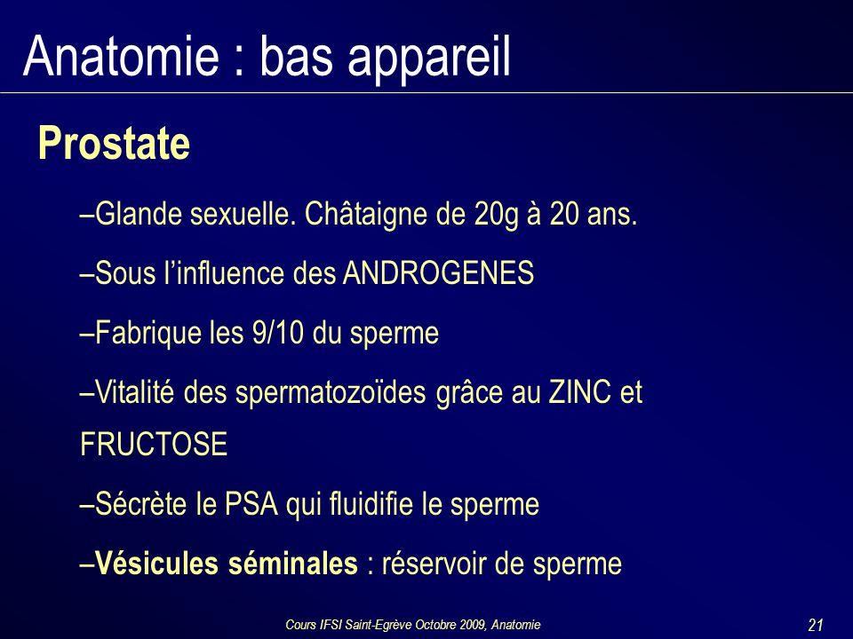 Cours IFSI Saint-Egrève Octobre 2009, Anatomie 21 Anatomie : bas appareil Prostate –Glande sexuelle. Châtaigne de 20g à 20 ans. –Sous l'influence des