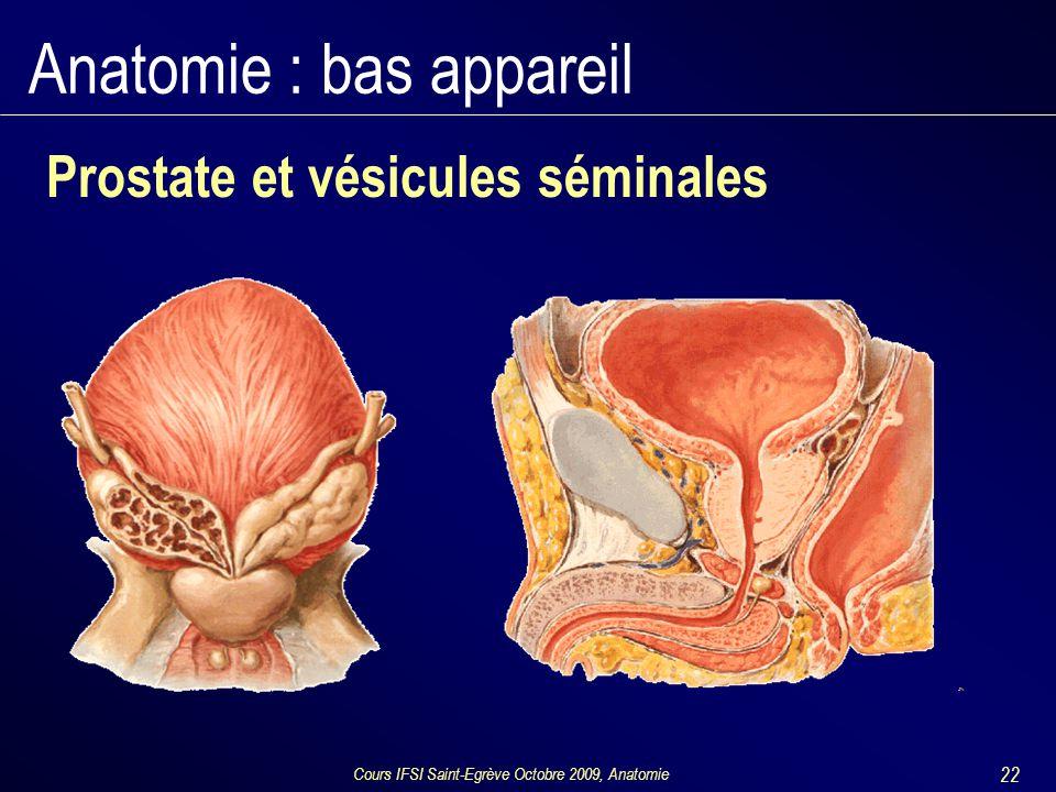 Cours IFSI Saint-Egrève Octobre 2009, Anatomie 22 Anatomie : bas appareil Prostate et vésicules séminales