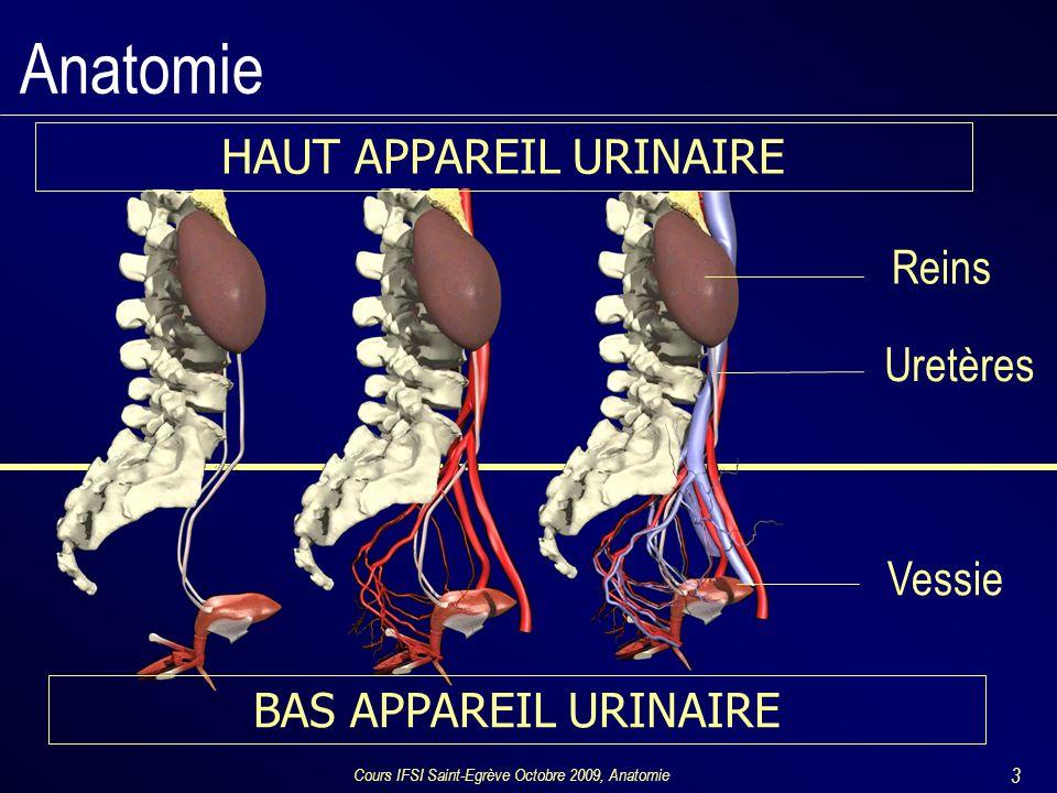 Cours IFSI Saint-Egrève Octobre 2009, Anatomie 3 Anatomie Uretères Reins Vessie BAS APPAREIL URINAIRE HAUT APPAREIL URINAIRE