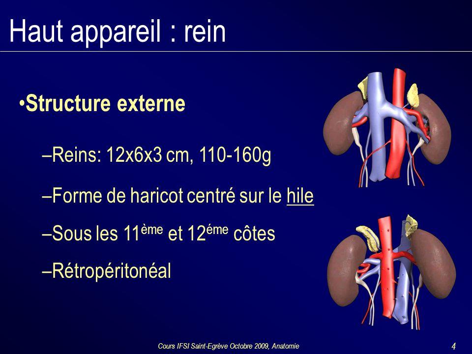 Cours IFSI Saint-Egrève Octobre 2009, Anatomie 4 Structure externe –Reins: 12x6x3 cm, 110-160g –Forme de haricot centré sur le hile –Sous les 11 ème et 12 éme côtes –Rétropéritonéal Haut appareil : rein