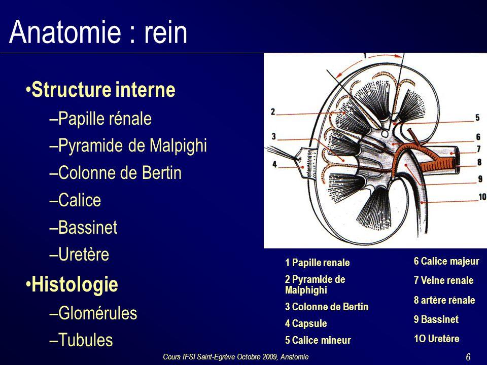 Cours IFSI Saint-Egrève Octobre 2009, Anatomie 6 Anatomie : rein Structure interne –Papille rénale –Pyramide de Malpighi –Colonne de Bertin –Calice –Bassinet –Uretère Histologie –Glomérules –Tubules 1 Papille renale 2 Pyramide de Malphighi 3 Colonne de Bertin 4 Capsule 5 Calice mineur 6 Calice majeur 7 Veine renale 8 artère rénale 9 Bassinet 1O Uretère