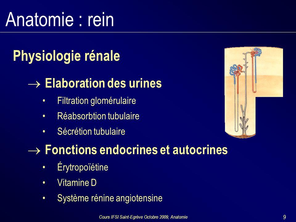 Cours IFSI Saint-Egrève Octobre 2009, Anatomie 9 Anatomie : rein Physiologie rénale  Elaboration des urines Filtration glomérulaire Réabsorbtion tubulaire Sécrétion tubulaire  Fonctions endocrines et autocrines Érytropoïétine Vitamine D Système rénine angiotensine