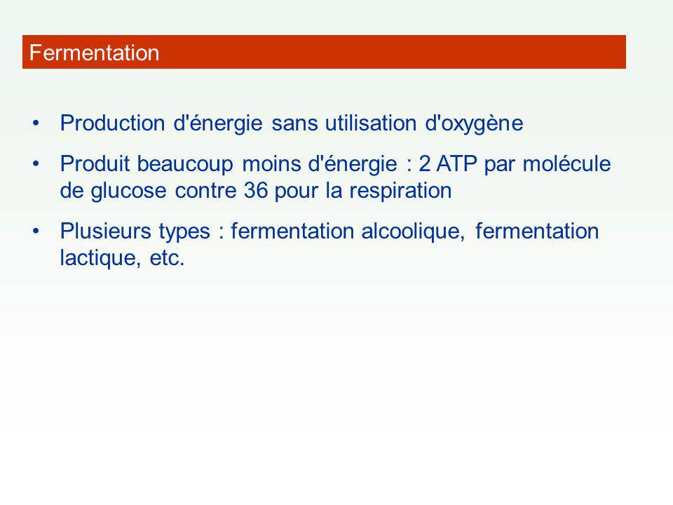 Fermentation Production d'énergie sans utilisation d'oxygène Produit beaucoup moins d'énergie : 2 ATP par molécule de glucose contre 36 pour la respir
