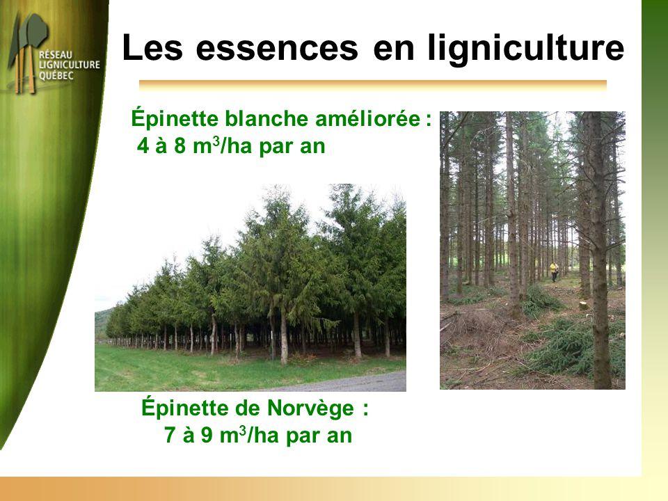 Les essences en ligniculture Épinette blanche améliorée : 4 à 8 m 3 /ha par an Épinette de Norvège : 7 à 9 m 3 /ha par an