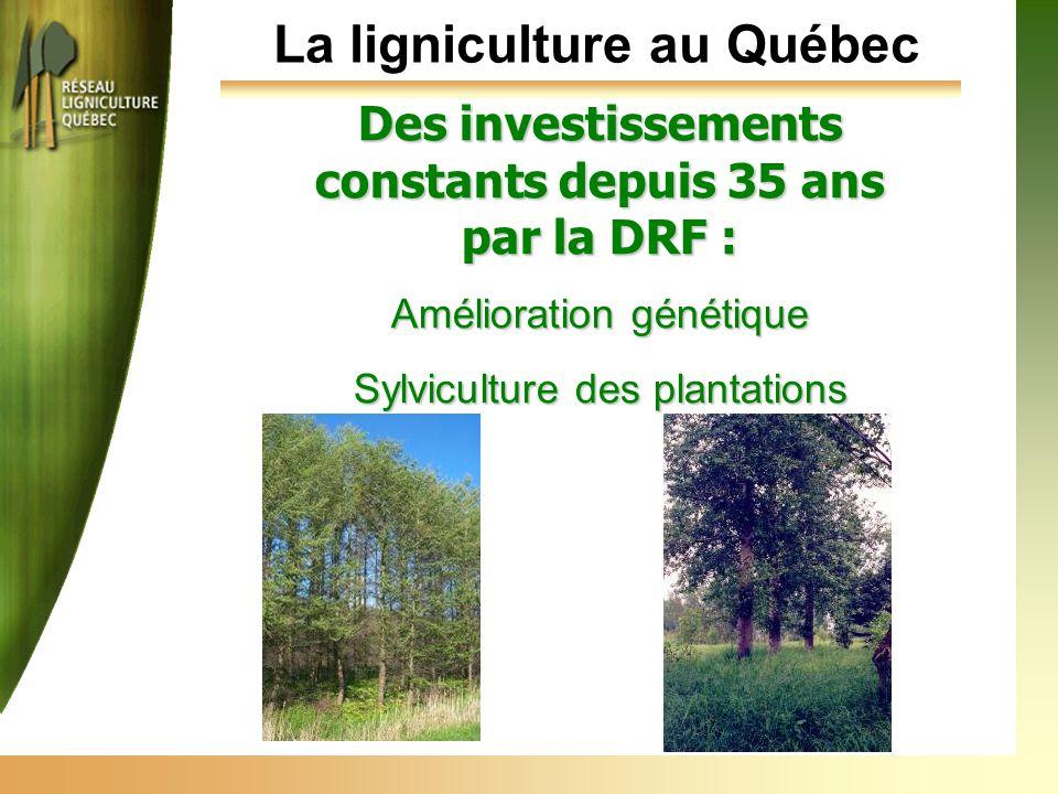 La ligniculture au Québec Des investissements constants depuis 35 ans par la DRF : Amélioration génétique Sylviculture des plantations