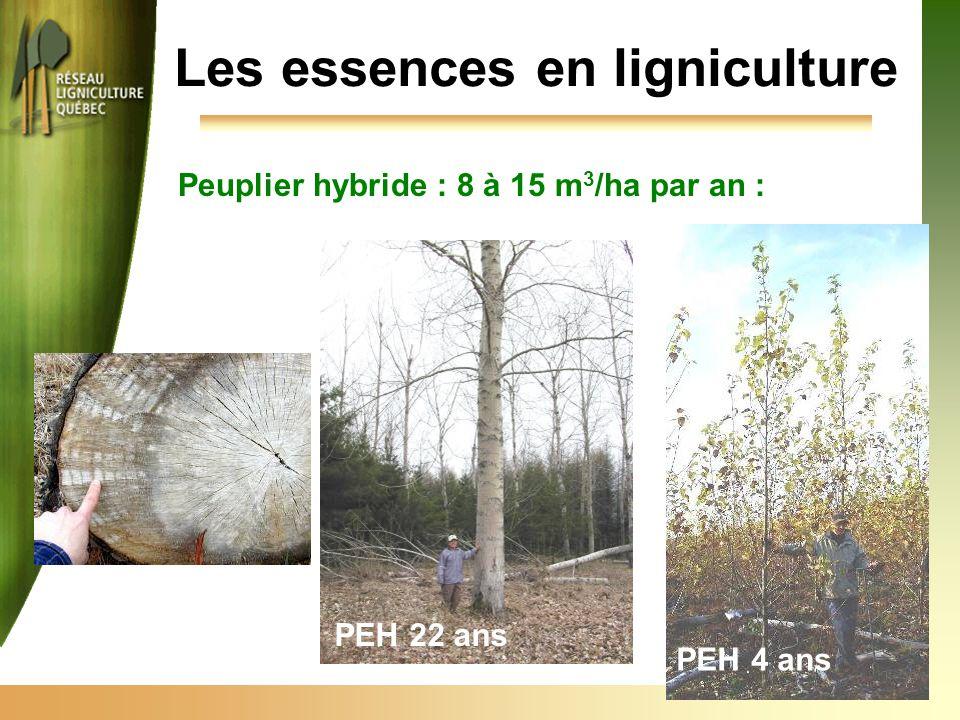 Peuplier hybride : 8 à 15 m 3 /ha par an : Les essences en ligniculture PEH 4 ans PEH 22 ans