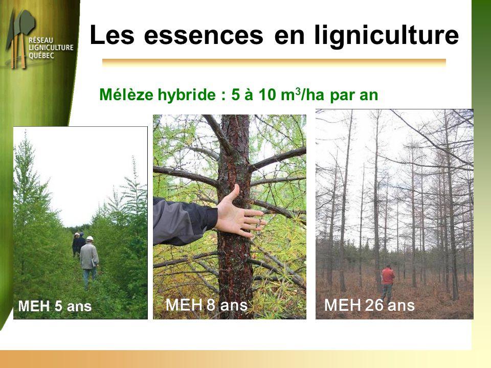 Les essences en ligniculture Mélèze hybride : 5 à 10 m 3 /ha par an MEH 8 ans MEH 26 ans