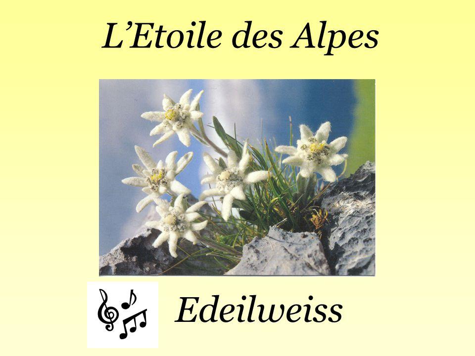 L'Etoile des Alpes Edeilweiss