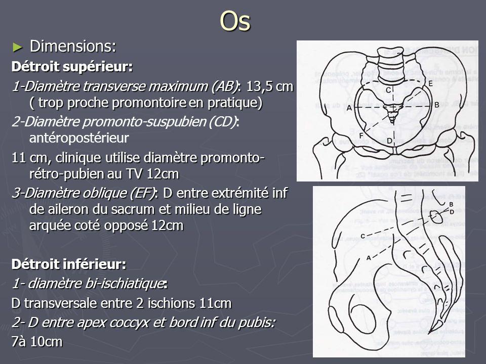 Os ► Dimensions: Détroit supérieur: 1-Diamètre transverse maximum (AB): 13,5 cm ( trop proche promontoire en pratique) 2-Diamètre promonto-suspubien (