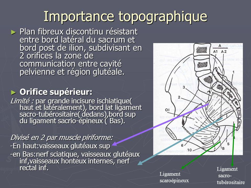 Importance topographique ► Plan fibreux discontinu résistant entre bord latéral du sacrum et bord post de ilion, subdivisant en 2 orifices la zone de