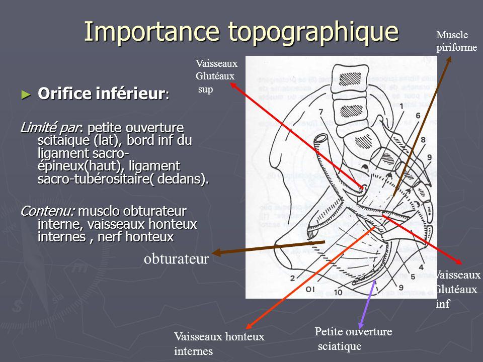 Importance topographique ► Orifice inférieur : Limité par: petite ouverture scitaique (lat), bord inf du ligament sacro- épineux(haut), ligament sacro