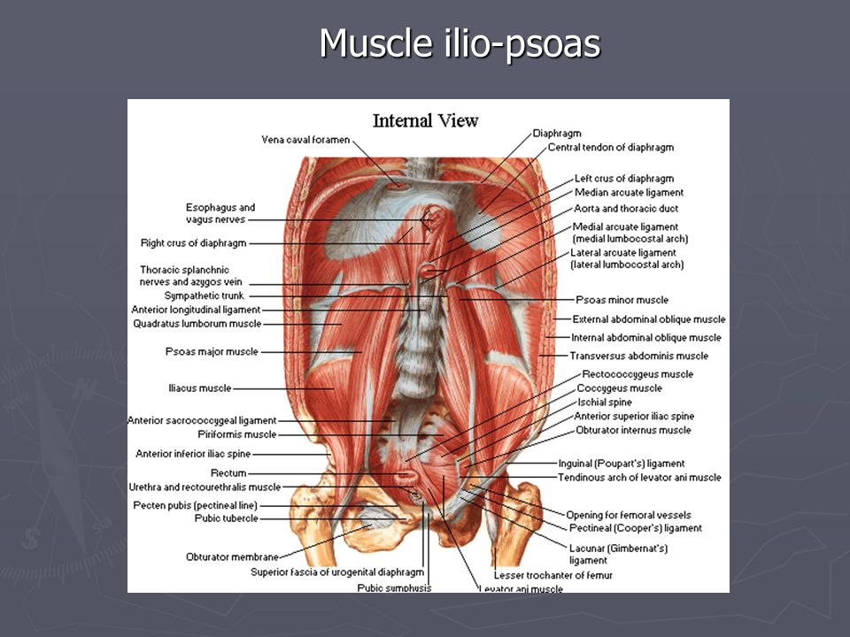 Muscle ilio-psoas