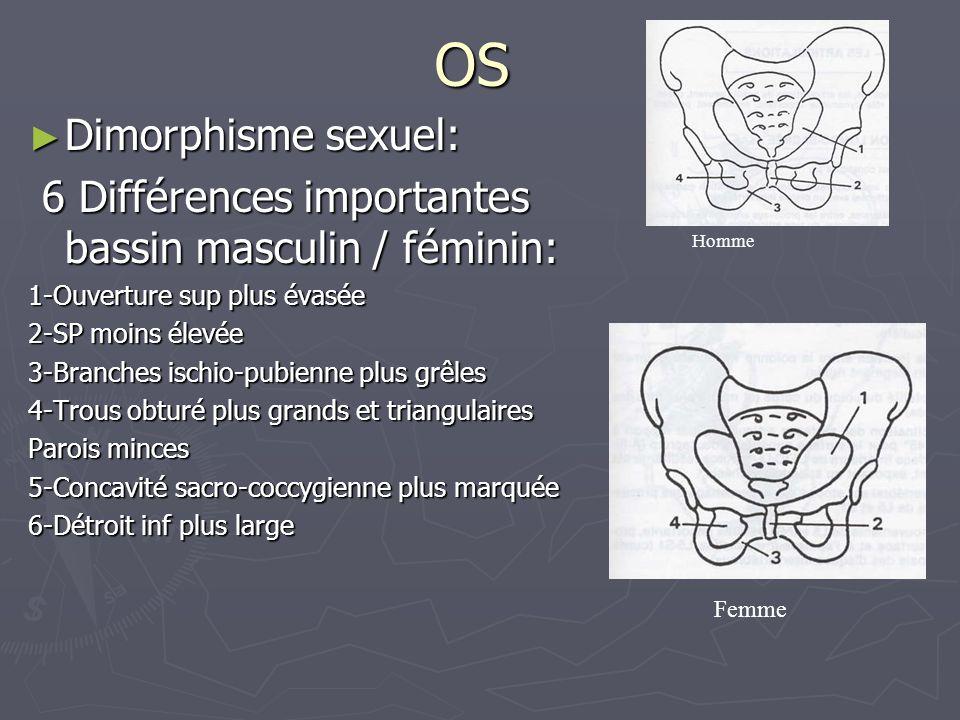 OS ► Dimorphisme sexuel: 6 Différences importantes bassin masculin / féminin: 6 Différences importantes bassin masculin / féminin: 1-Ouverture sup plu