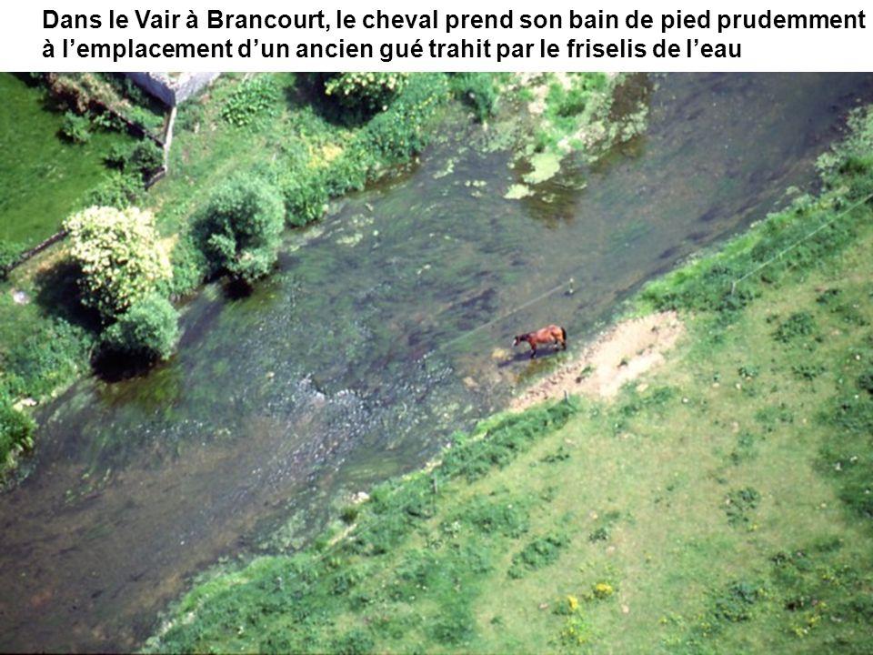 Dans le Vair à Brancourt, le cheval prend son bain de pied prudemment à l'emplacement d'un ancien gué trahit par le friselis de l'eau