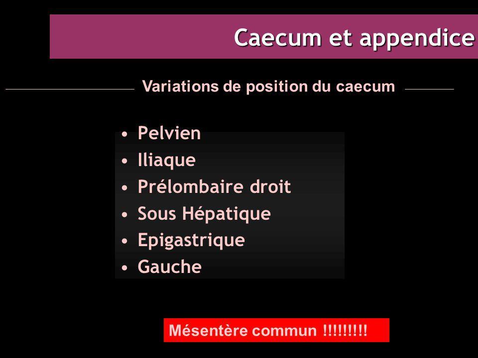 Caecum et appendice Pelvien Iliaque Prélombaire droit Sous Hépatique Epigastrique Gauche Variations de position du caecum Mésentère commun !!!!!!!!!
