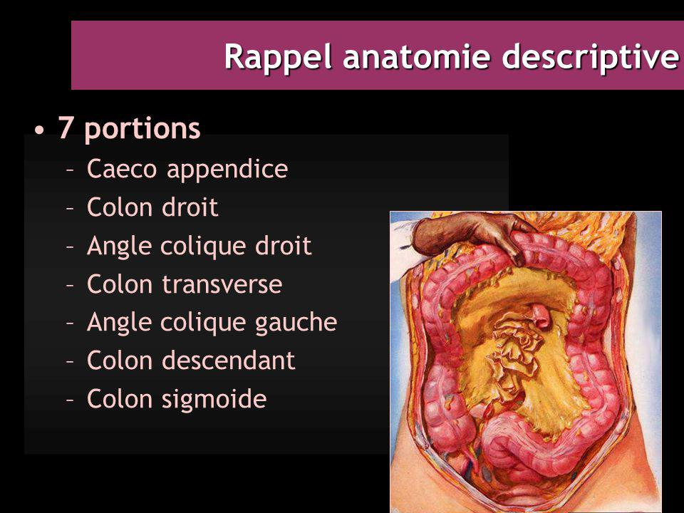 Rappel anatomie descriptive 7 portions –Caeco appendice –Colon droit –Angle colique droit –Colon transverse –Angle colique gauche –Colon descendant –Colon sigmoide