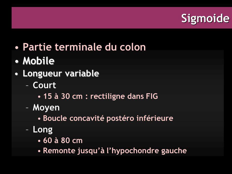 Sigmoide Partie terminale du colon MobileMobile Longueur variableLongueur variable –Court 15 à 30 cm : rectiligne dans FIG –Moyen Boucle concavité pos