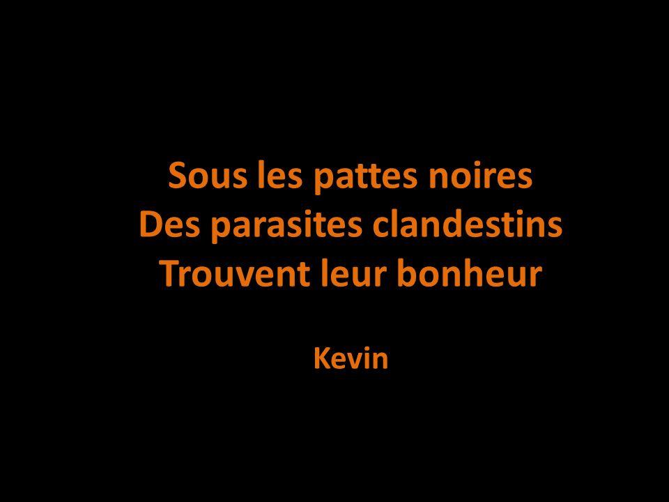 Sous les pattes noires Des parasites clandestins Trouvent leur bonheur Kevin