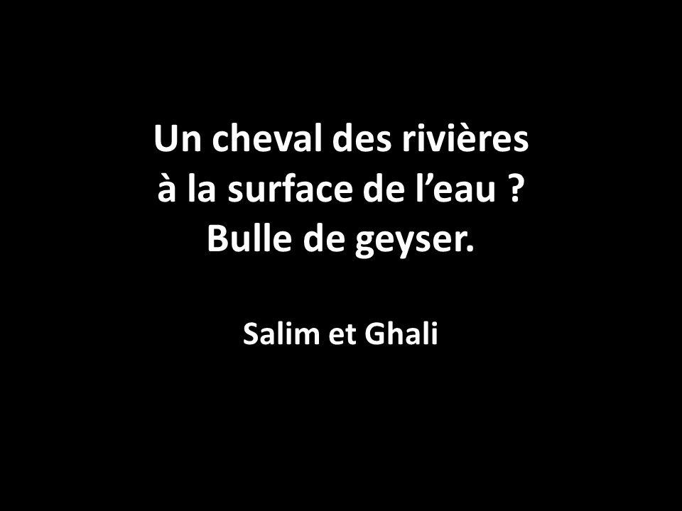 Un cheval des rivières à la surface de l'eau ? Bulle de geyser. Salim et Ghali