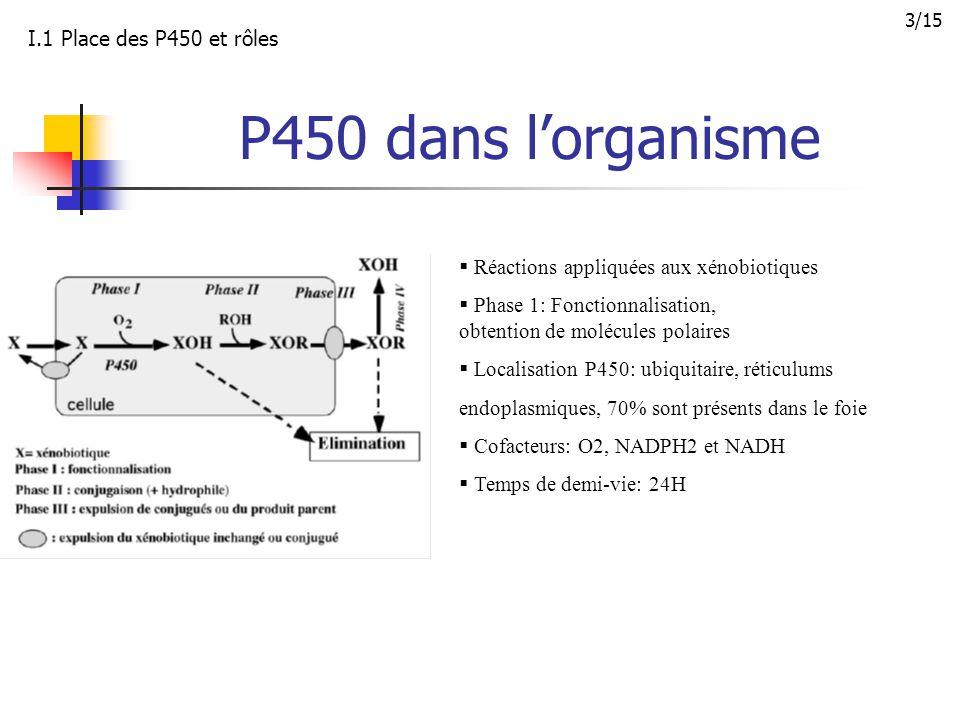 Structure des P450 P450 = Hème + Apoprotéine Hème = protoporphyrine + fer Equilibre: fer hexacoordonné dit de bas spin/ fer pentacoordonné dit de haut spin Interaction substrat ou inhibiteur: déplacement de l'équilibre I.1 Place des P450 et rôles 4/15