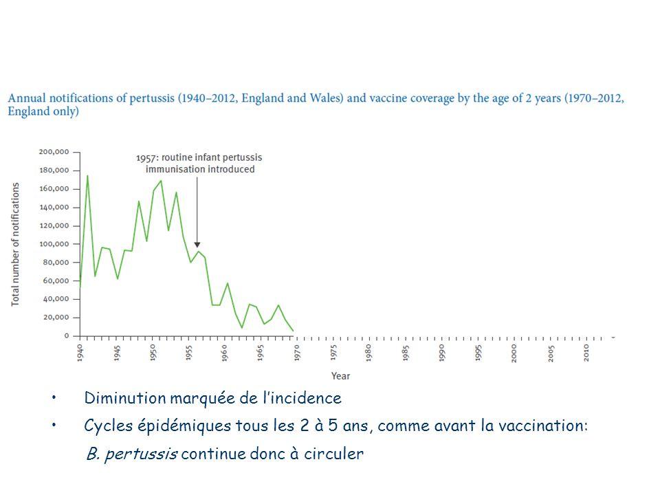 Diminution marquée de l'incidence Cycles épidémiques tous les 2 à 5 ans, comme avant la vaccination: B.
