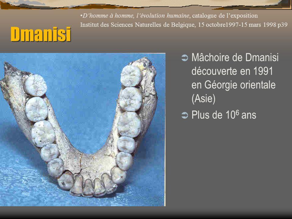 Dmanisi  Mâchoire de Dmanisi découverte en 1991 en Géorgie orientale (Asie)  Plus de 10 6 ans D'homme à homme, l'évolution humaine, catalogue de l'e