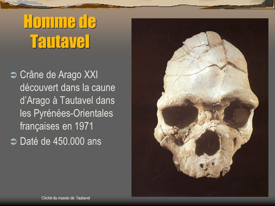 Homme de Tautavel  Crâne de Arago XXI découvert dans la caune d'Arago à Tautavel dans les Pyrénées-Orientales françaises en 1971  Daté de 450.000 an