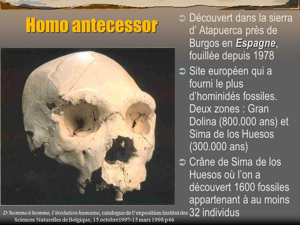 Homo antecessor Espagne  Découvert dans la sierra d' Atapuerca près de Burgos en Espagne, fouillée depuis 1978  Site européen qui a fourni le plus d