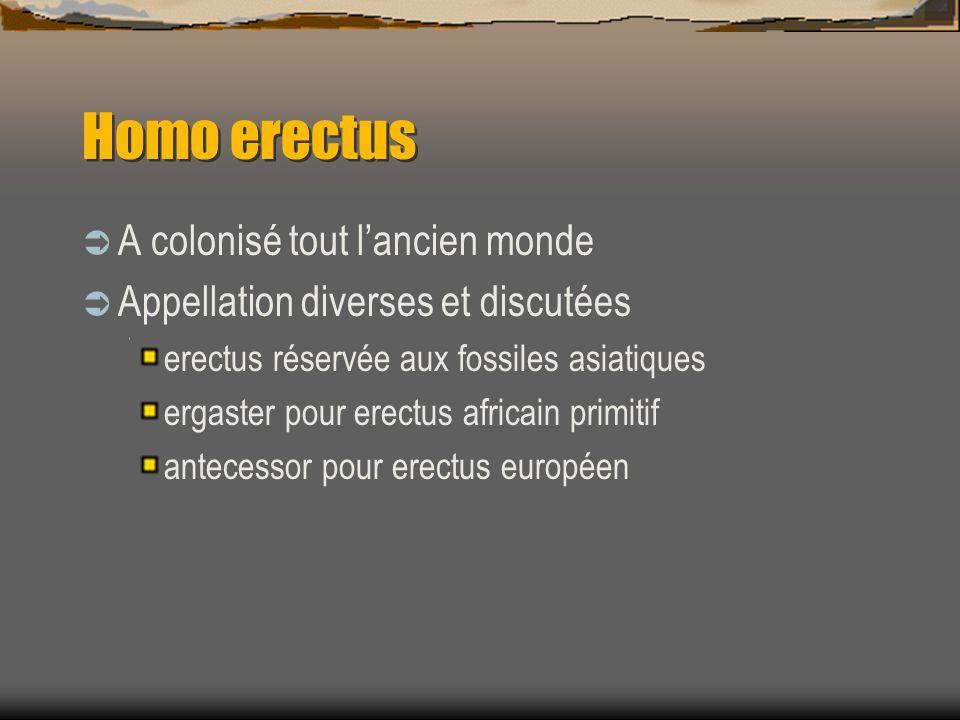 Homo erectus  A colonisé tout l'ancien monde  Appellation diverses et discutées erectus réservée aux fossiles asiatiques ergaster pour erectus afric