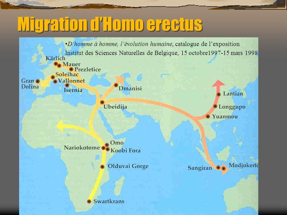 Migration d'Homo erectus D'homme à homme, l'évolution humaine, catalogue de l'exposition Institut des Sciences Naturelles de Belgique, 15 octobre1997-