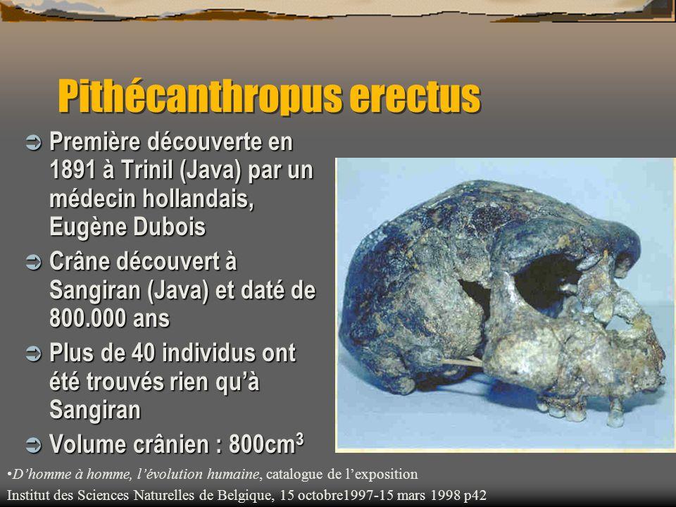 Pithécanthropus erectus  Première découverte en 1891 à Trinil (Java) par un médecin hollandais, Eugène Dubois  Crâne découvert à Sangiran (Java) et
