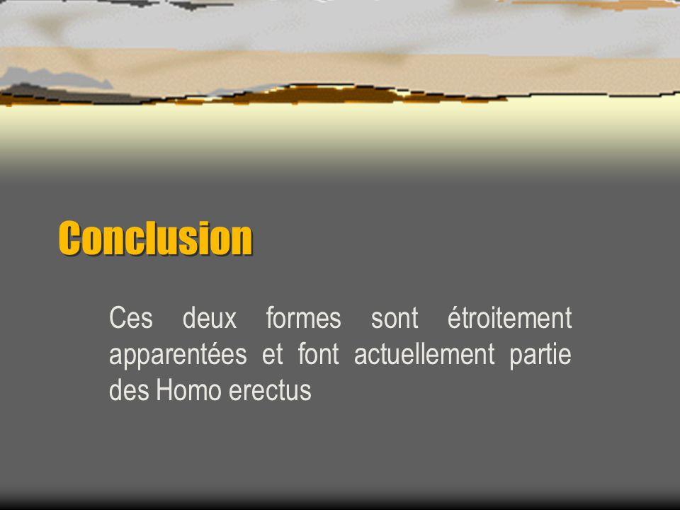 Conclusion Ces deux formes sont étroitement apparentées et font actuellement partie des Homo erectus