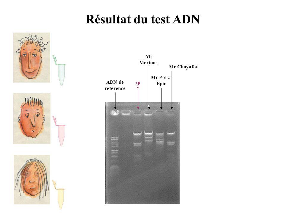 Résultat du test ADN ADN de référence Mr Porc- Epic Mr Mérinos Mr Chuyafon ?