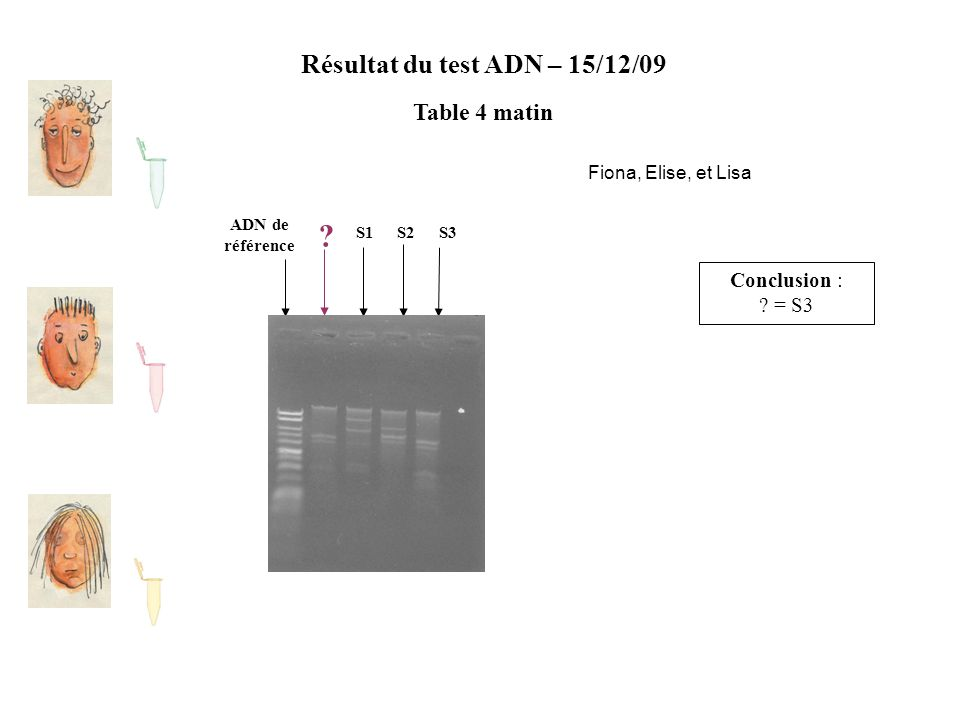 Résultat du test ADN – 15/12/09 Table 4 matin ADN de référence S2S1S3 ? Conclusion : ? = S3 Fiona, Elise, et Lisa