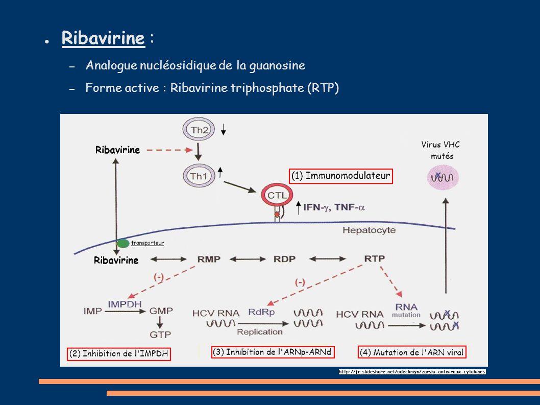 ● Ribavirine : – Analogue nucléosidique de la guanosine – Forme active : Ribavirine triphosphate (RTP)