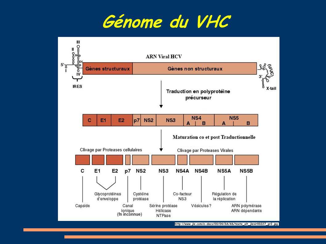 Génome du VHC
