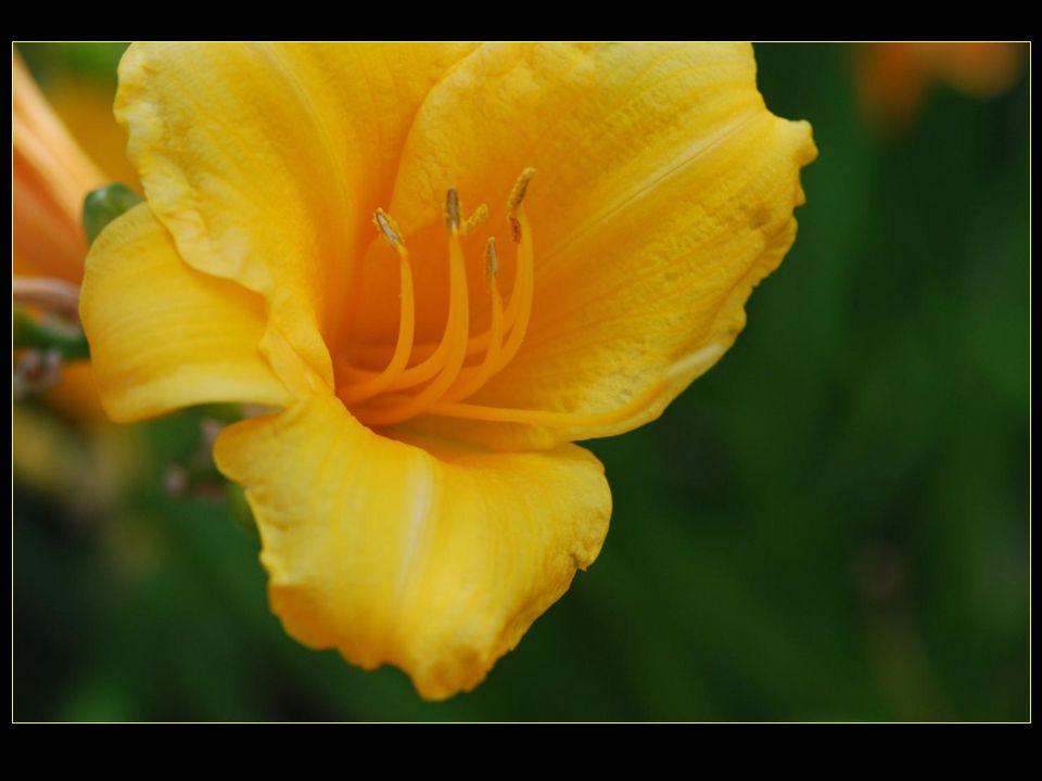 Place du port d'Iseo et ses massifs de fleurs