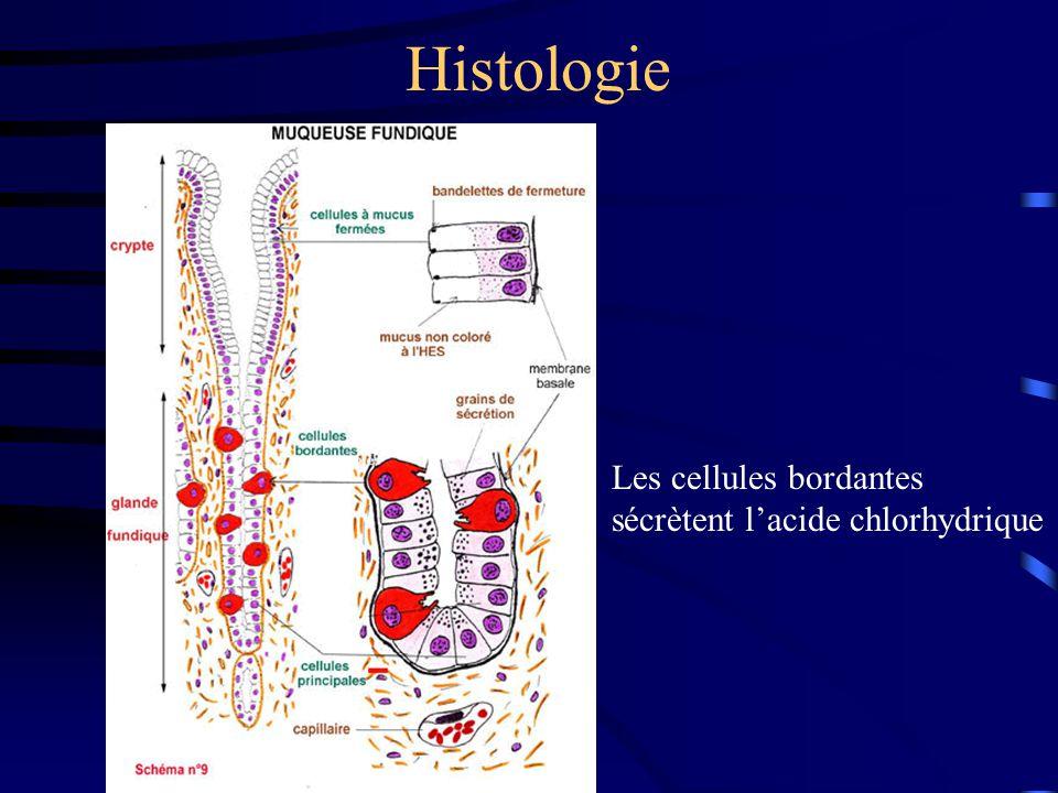 Régulation Voie nerveuse: le nerf vague Voie hormonale: la gastrine (cellules G) Voie paracrine: –histamine augmente la sécrétion d 'acide gastrique (cellules ECL) –somatostatine diminue la sécrétion d 'acide gastrique (cellules D)