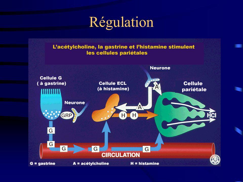 Applications thérapeutiques SUCRALFATE, POLYSYLANE...Protéger la muqueuse de l 'acide: SUCRALFATE, POLYSYLANE...