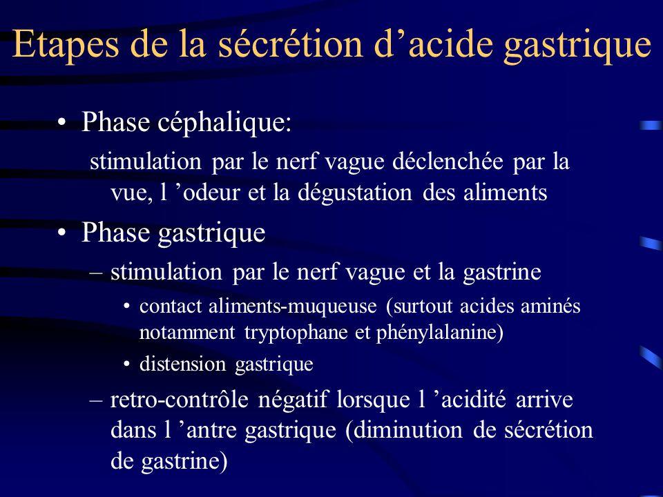 Etapes de la sécrétion d'acide gastrique Phase intestinale: –stimulation distension intestinale absorption AA –retro-contrôle négatif: graisses (augmentation de la neurotensine) hyperosmolarité intraluminale acidification duodénale (augmentation de la sécrétine)