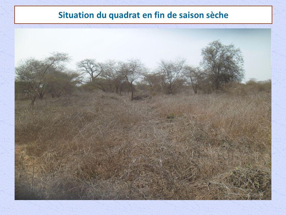 Présentation du quadrat Termitière Tamarinus indica Entrée de terrier Acacia seyalMerrimia aegyptiacaBoscia senegalensis Adansonia digitata
