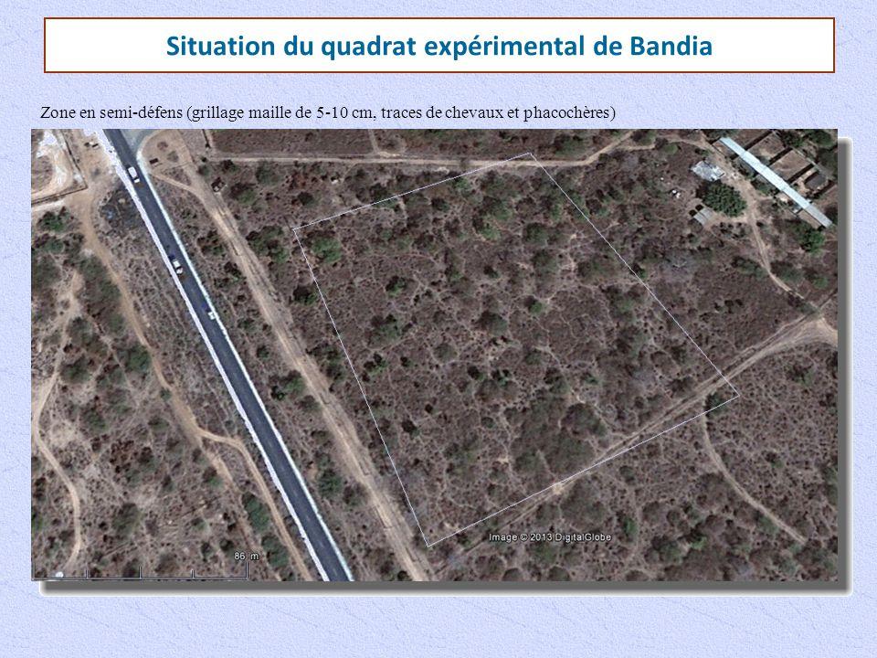 Situation du quadrat expérimental de Bandia Zone en semi-défens (grillage maille de 5-10 cm, traces de chevaux et phacochères)
