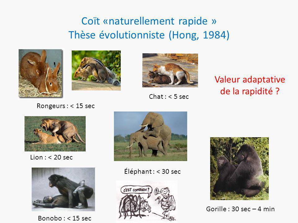 Coït «naturellement rapide » Thèse évolutionniste (Hong, 1984) Rongeurs : < 15 sec Chat : < 5 sec Lion : < 20 sec Éléphant : < 30 sec Gorille : 30 sec – 4 min Bonobo : < 15 sec Valeur adaptative de la rapidité
