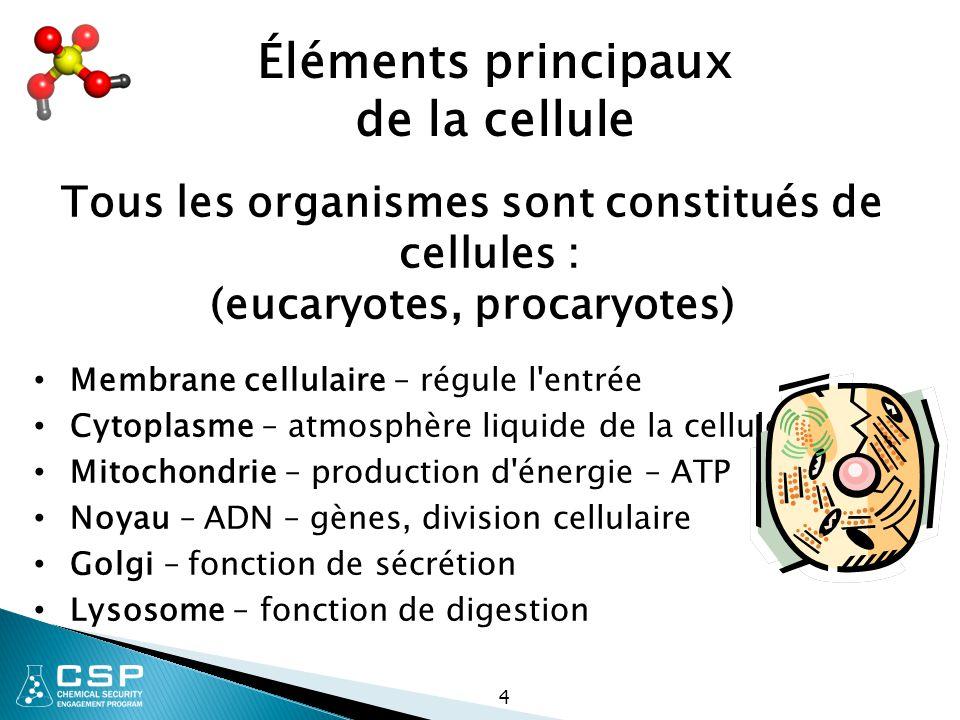 4 Tous les organismes sont constitués de cellules : (eucaryotes, procaryotes) Membrane cellulaire – régule l'entrée Cytoplasme – atmosphère liquide de
