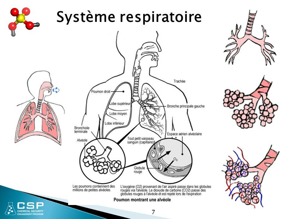 58 Toxines systémiques - ont un effet sur le corps entier ou de nombreux organes plutôt que sur un site spécifique, par exemple KCN affecte pratiquement chaque cellule ou organe dans le corps en interférant avec l aptitude des cellules à utiliser l oxygène.