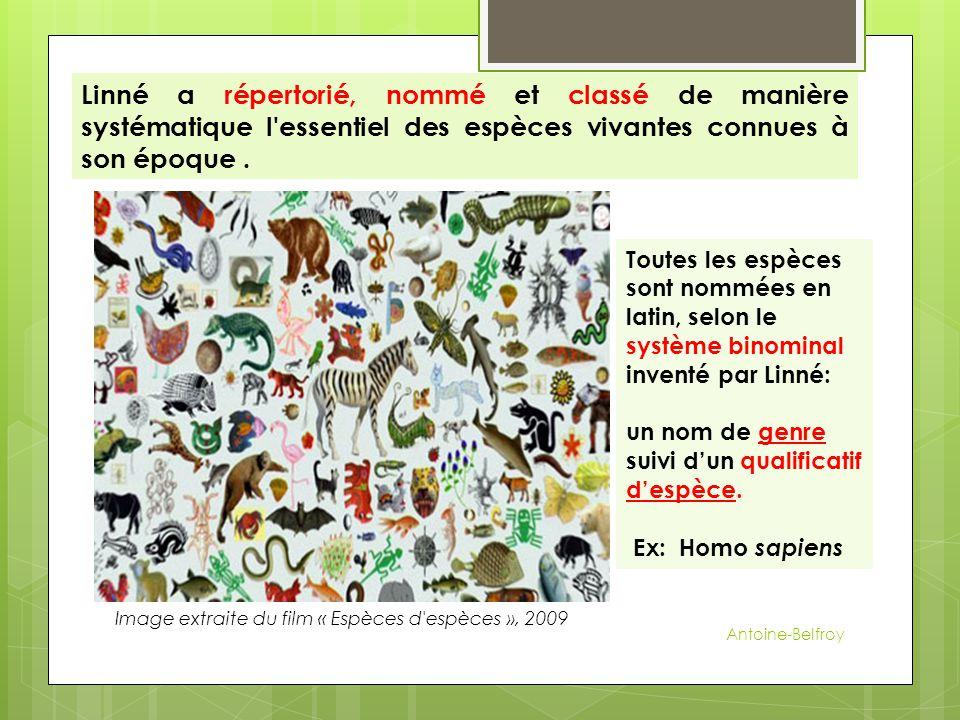 Linné a répertorié, nommé et classé de manière systématique l'essentiel des espèces vivantes connues à son époque. Toutes les espèces sont nommées en