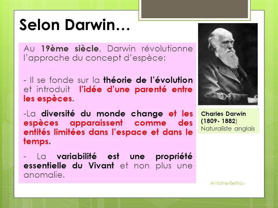 Selon Darwin… Au 19ème siècle, Darwin révolutionne l'approche du concept d'espèce: - Il se fonde sur la théorie de l'évolution et introduit l'idée d'u