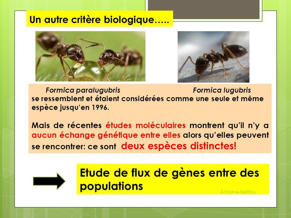 Un autre critère biologique….. Formica paralugubris Formica lugubris se ressemblent et étaient considérées comme une seule et même espèce jusqu'en 199
